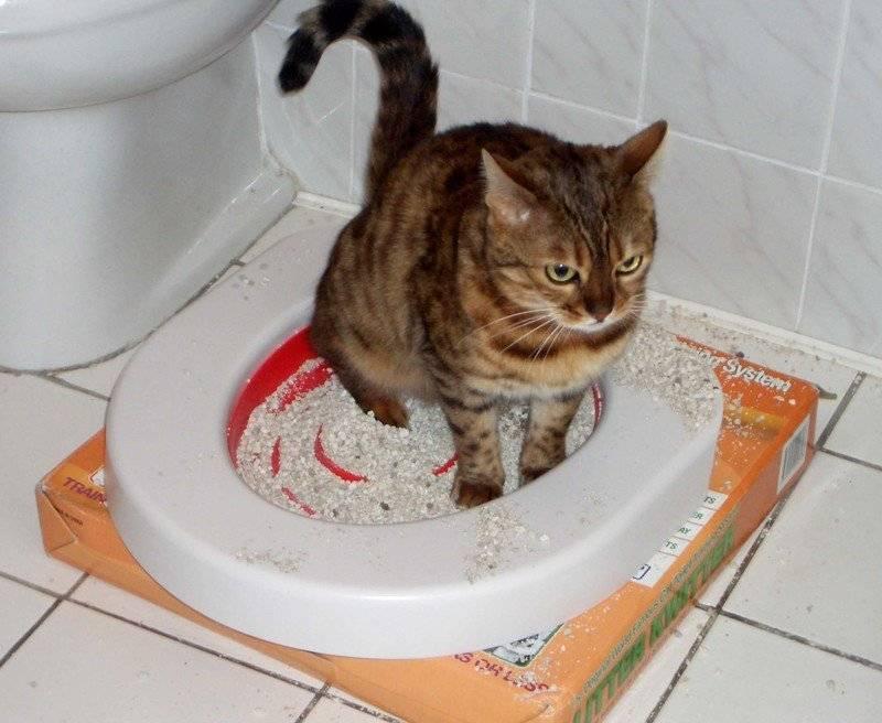 Затрудненное мочеиспускание у кота причины лечение - муркин дом