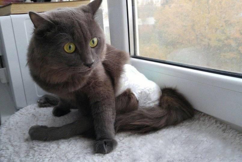 Рахит у котят и кошек: причины, симптомы, лечение