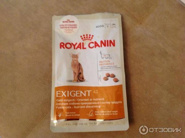 Обзор и отзывы ветеринаров о корме роял канин для кошек