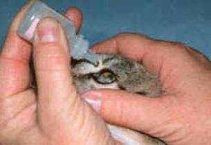 Чем промыть глаза коту в домашних условиях: обзор препаратов, особенности применения, советы ветеринаров