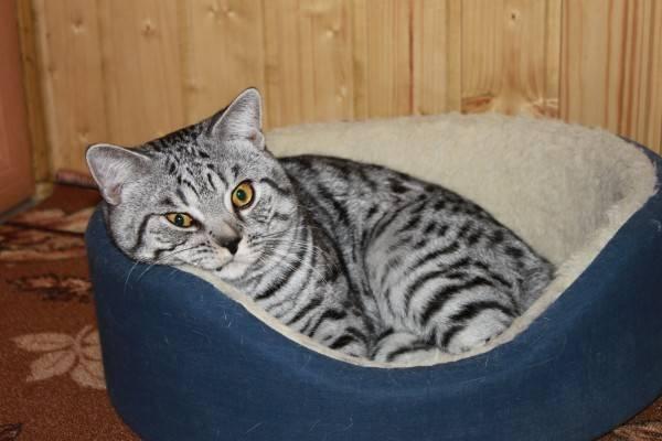 Как приучить кошку к лежанке: выбор новой лежанки