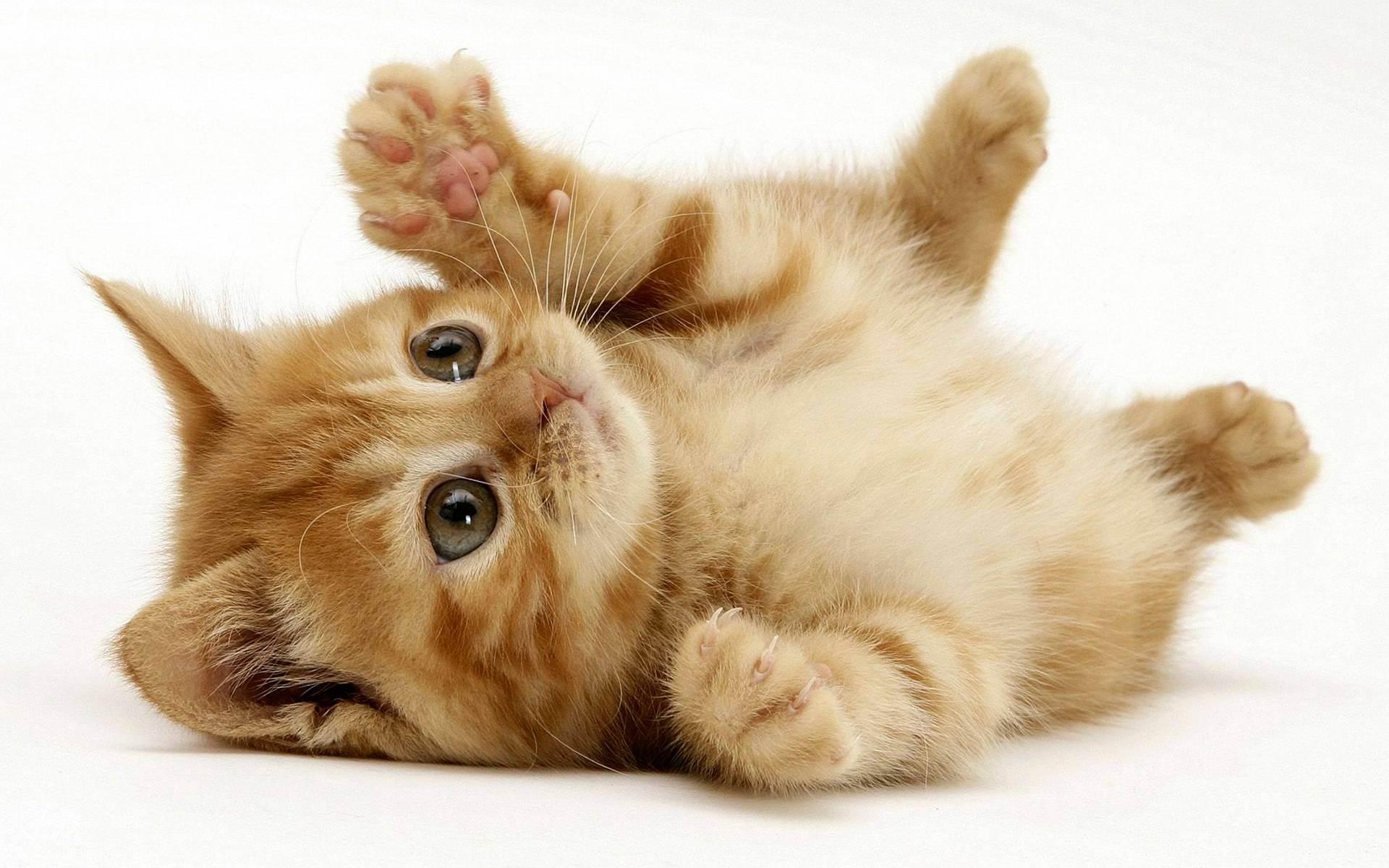 Кого лучше завести: кота или кошку - особенности поведения, характера и отзывы владельцев