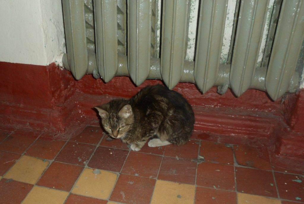 Как отвадить соседских котов от своего участка. топ-5 способов selo.guru — интернет портал о сельском хозяйстве