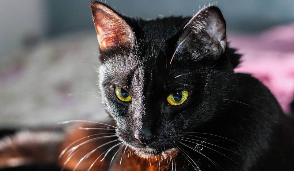 К чему снится кошки?