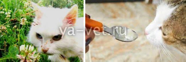 Колики у кошки: виды, признаки и симптомы, первая помощь, лечение, диета