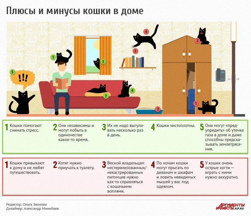 Кот или кошка – кого выбрать, кто лучше для дома и квартиры, ласковее и спокойнее?