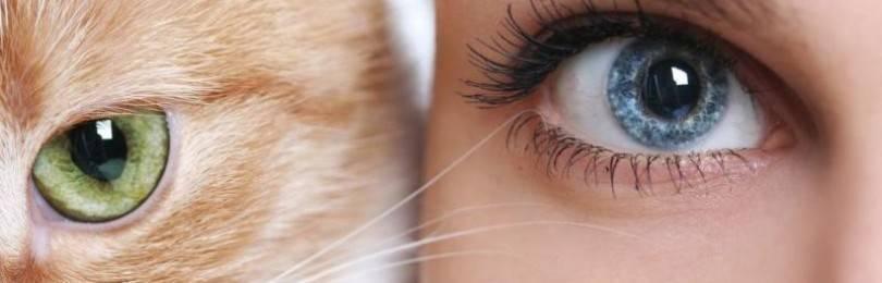 У кота воспалился глаз: чем лечить в домашних условиях