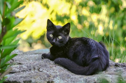 Имена для котов и кошек черно-белого окраса