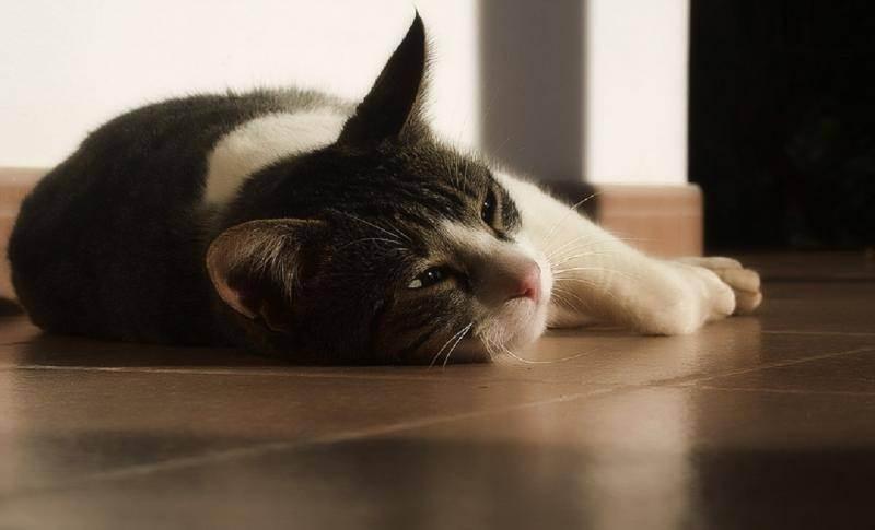 Запор у котенка - как помочь при запоре, симптомы запора