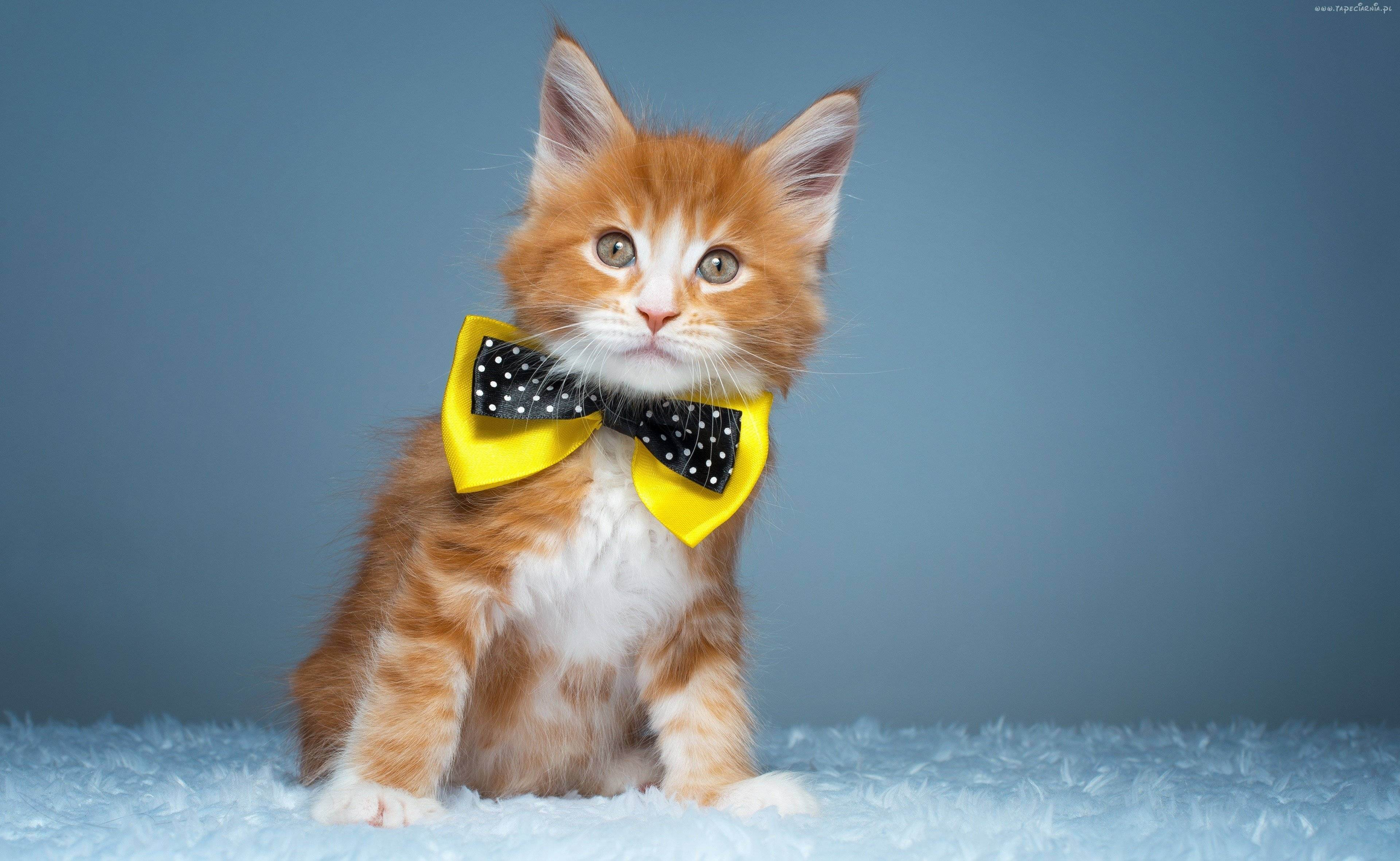 Самые популярные клички кошек и котов