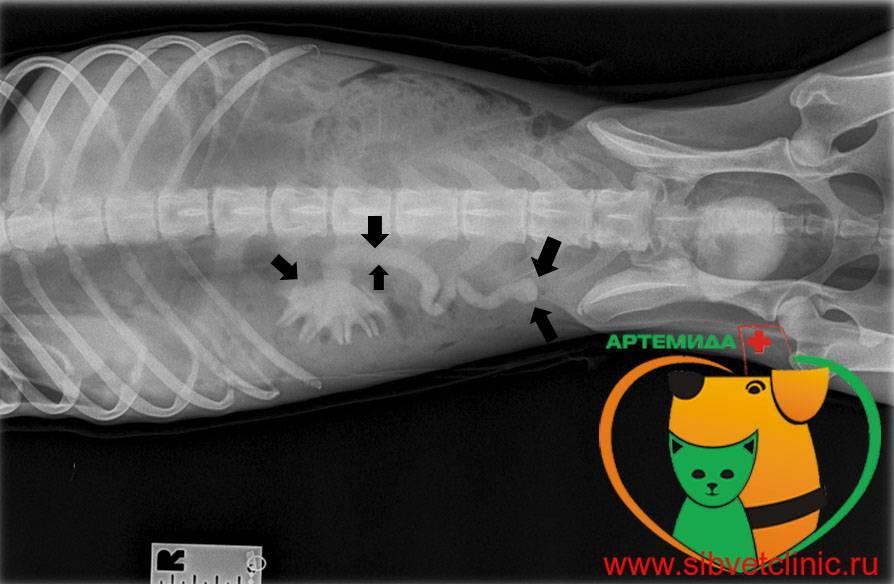 Болезни почек у кошек: симптомы и лечение, методы профилактики