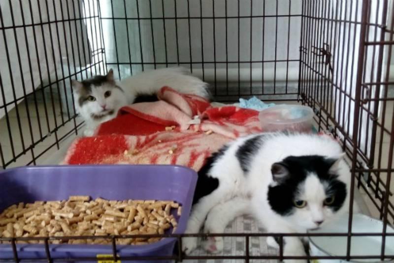 Сонник серая кошка в крови. к чему снится серая кошка в крови видеть во сне - сонник дома солнца