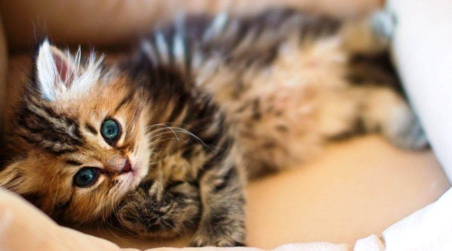 20 признаков того что ваша кошка заболела