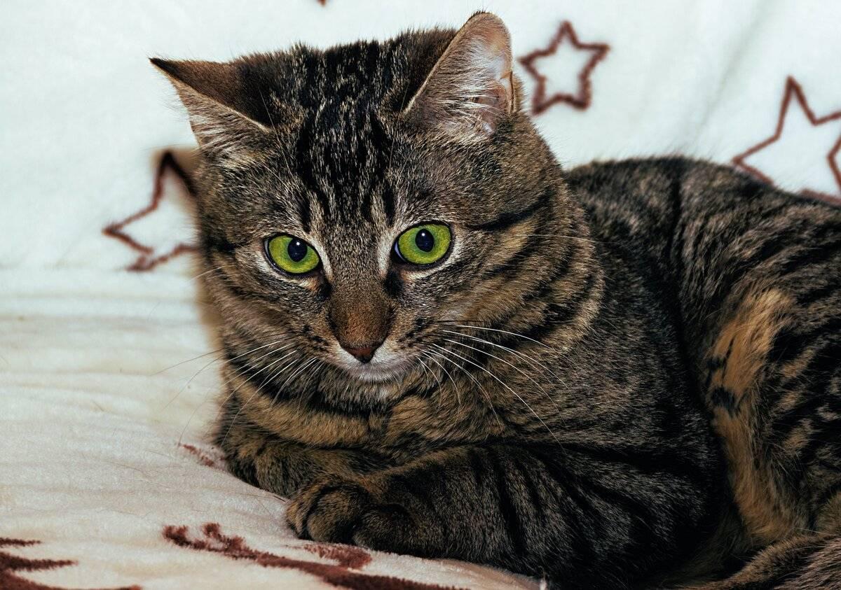 Что будет если кошке обрезать усы - последствия, интересные факты