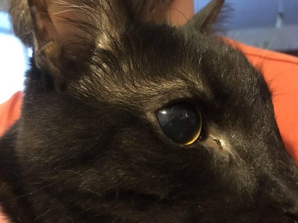 У кошки один зрачок узкий другой широкий, почему у кота расширенные зрачки?