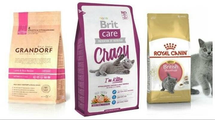Холистик корм для кошек: отзывы и подробный обзор лучших кормов