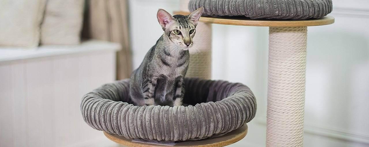 Домики для кошек с когтеточкой: виды, изготовление и размещение
