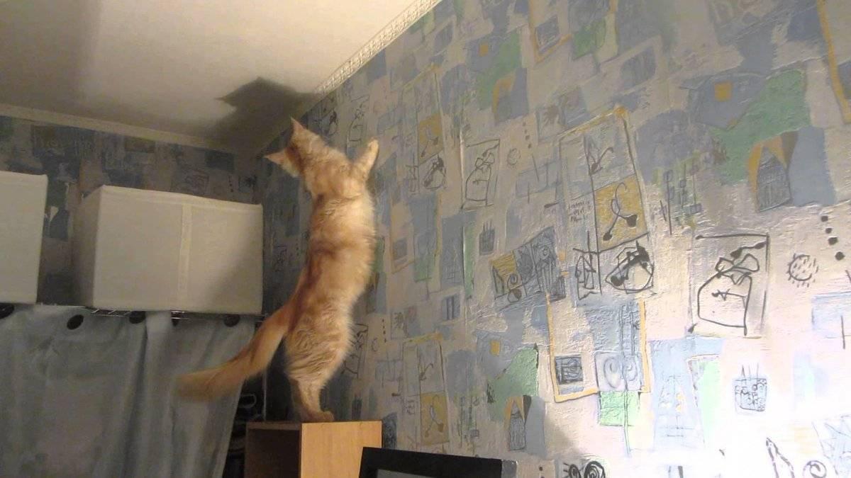 Почему кошка смотрит в стену?