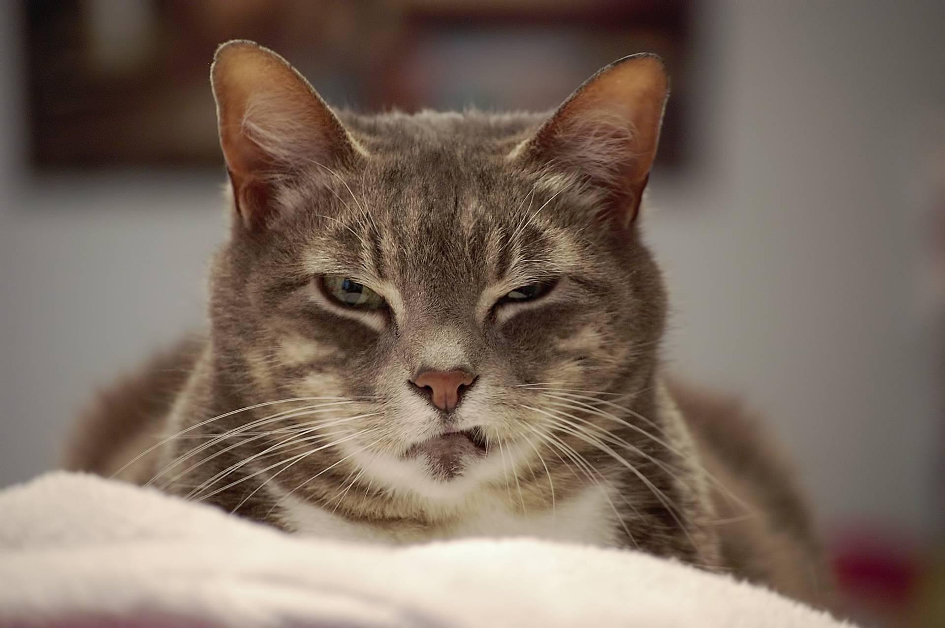 Кошка прищуривает один глаз что делать. кот щурит один глаз - врачебное дело