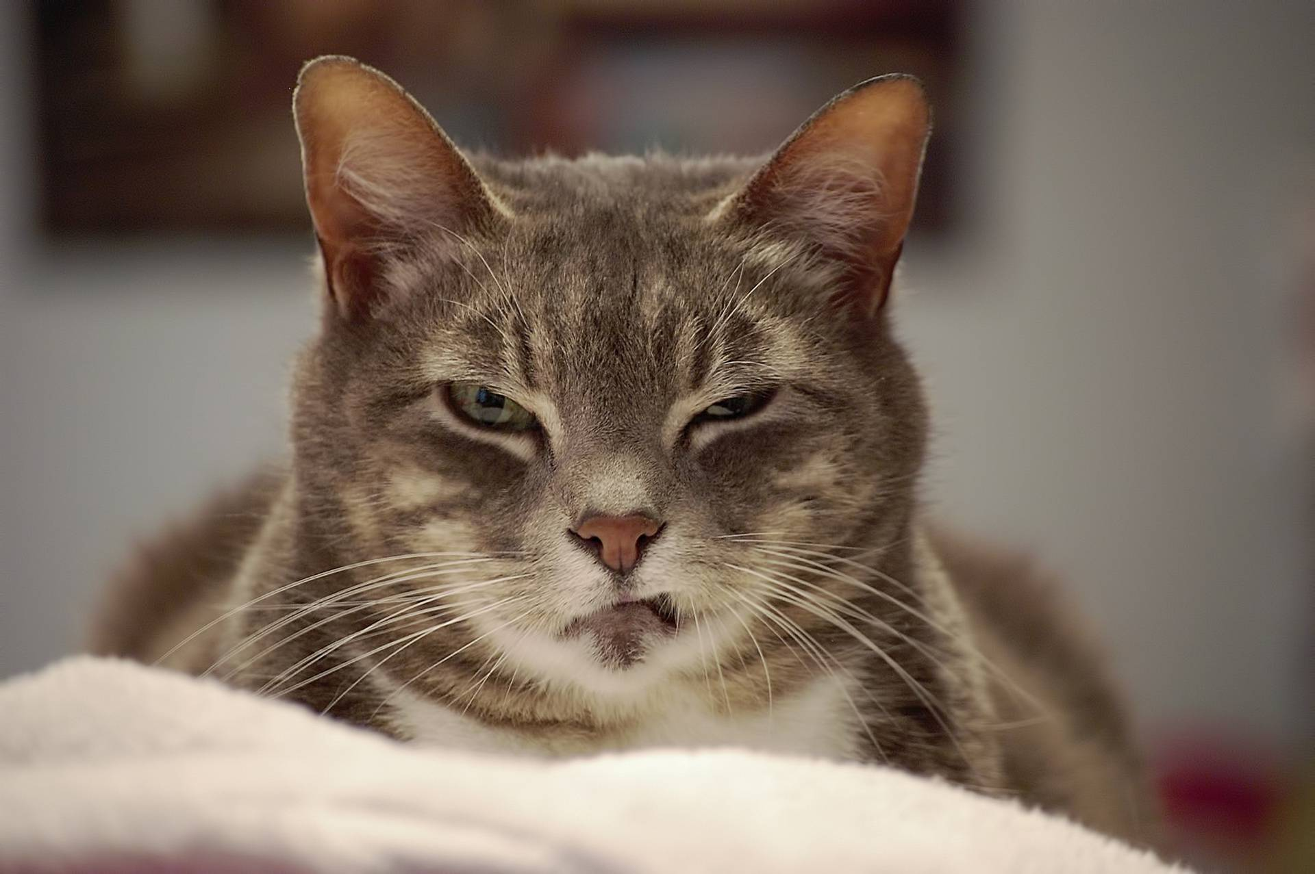Кот болеет глаза щурит
