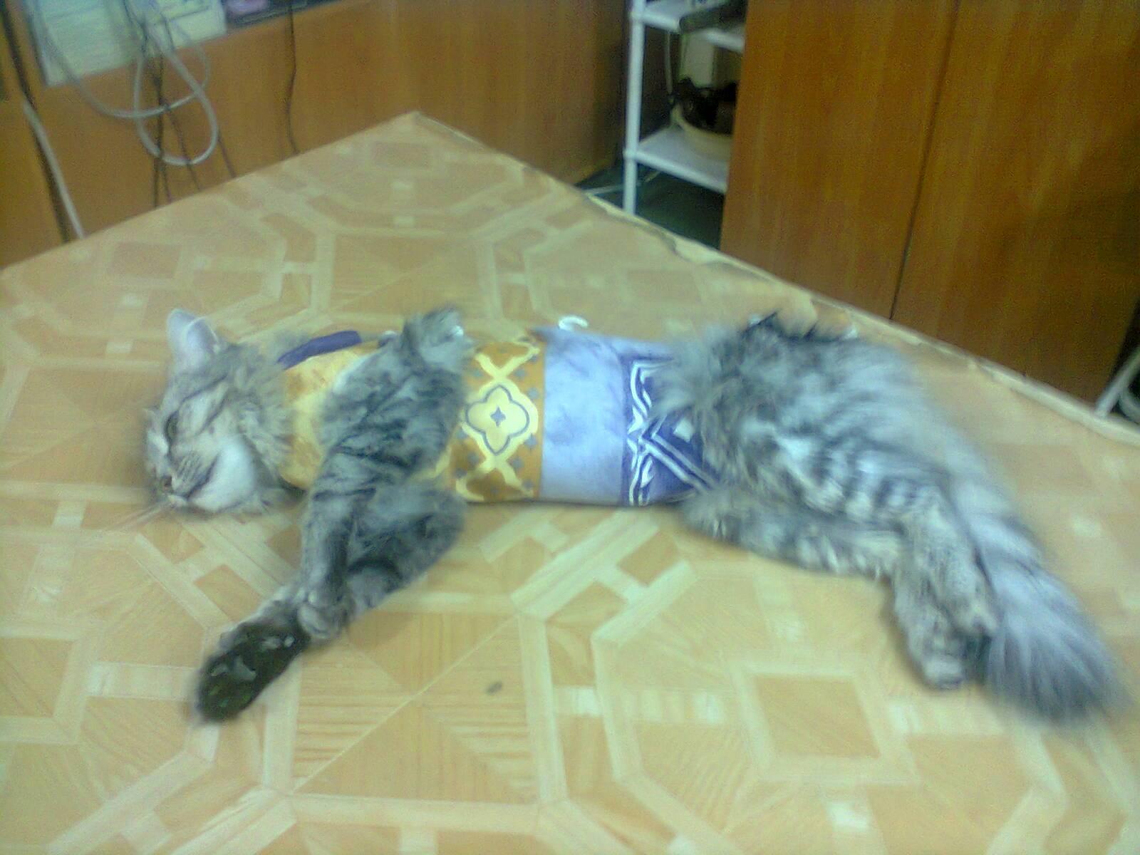 Сколько кошка отходит от наркоза после стерилизации: ваши действия в первые часы и дни