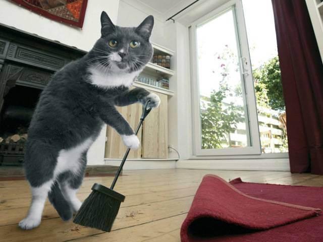 """Как избавиться от запаха кошачьей мочи на диване, деревянном полу, линолеуме, ковре, обуви и в других местах квартиры - """"vexsi"""" интересный журнал - обо всём!"""