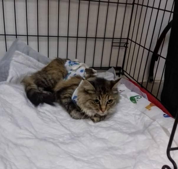 Почему кошка после стерилизации не ест и не пьет?