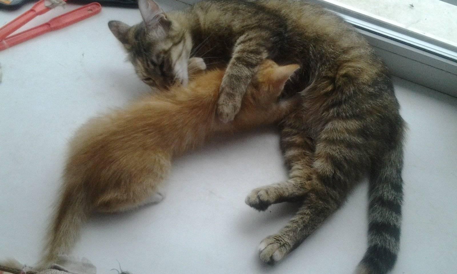 Когда котята открывают глаза и начинают видеть - новая медицина