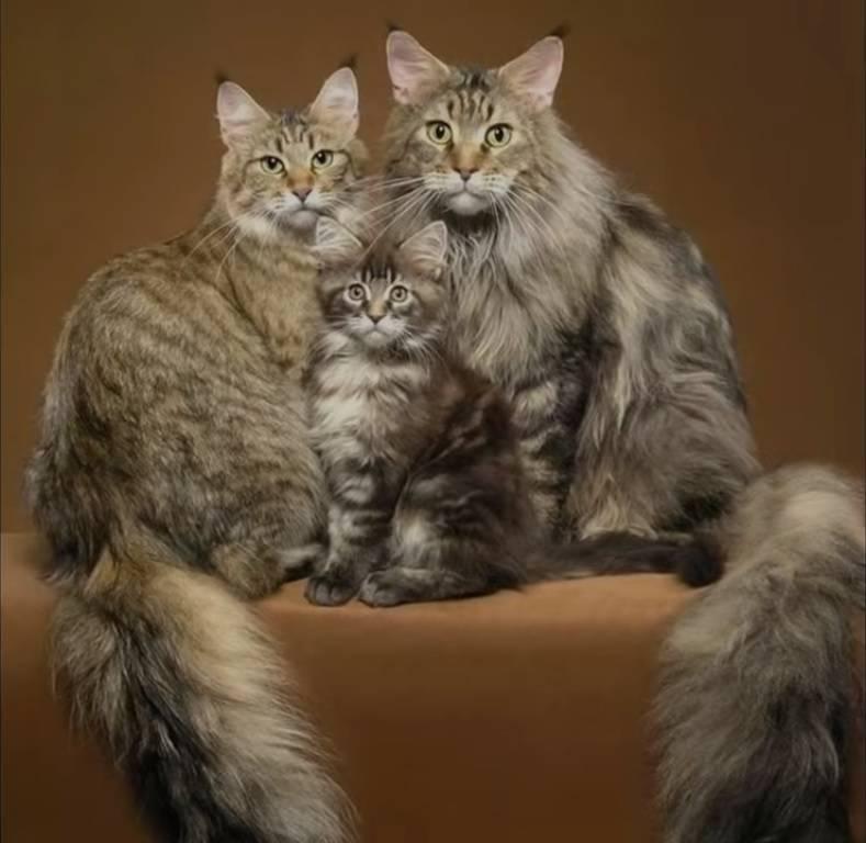 Сколько живут кошки в домашних условиях — максимальный и средний срок жизни