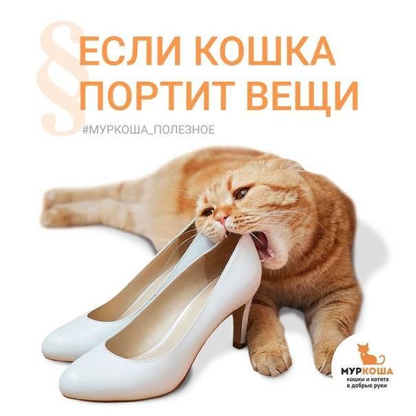 Кошка гадит на кровать: как решить проблему