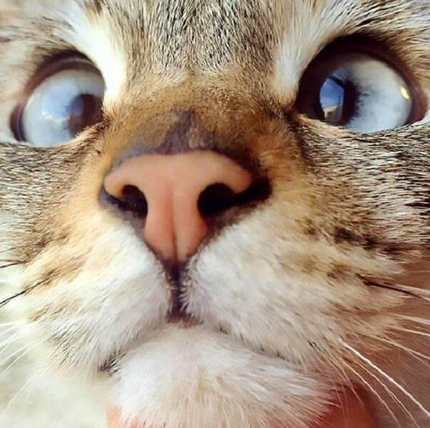 Сонник кот с косыми глазами. к чему снится кот с косыми глазами видеть во сне - сонник дома солнца