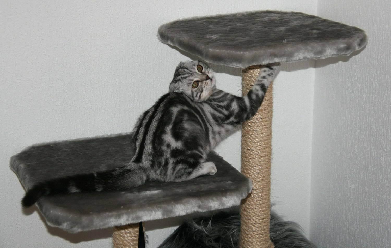 Когтеточки (52 фото): что это такое? какую выбрать угловую – столбик, комплекс, настенную или высокую когтеточку для кота? что лучше – джут или сизаль?