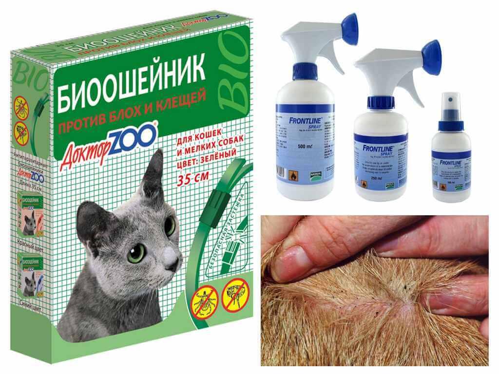 Народные средства от блох у кошек, котов и котят