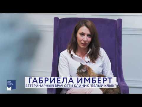 В украинском городе медсестра приютила сорок зверей