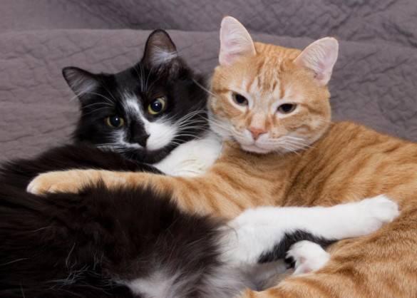 """Как купать котенка и кошку, как часто и когда можно купать котят - """"vexsi"""" интересный журнал - обо всём!"""
