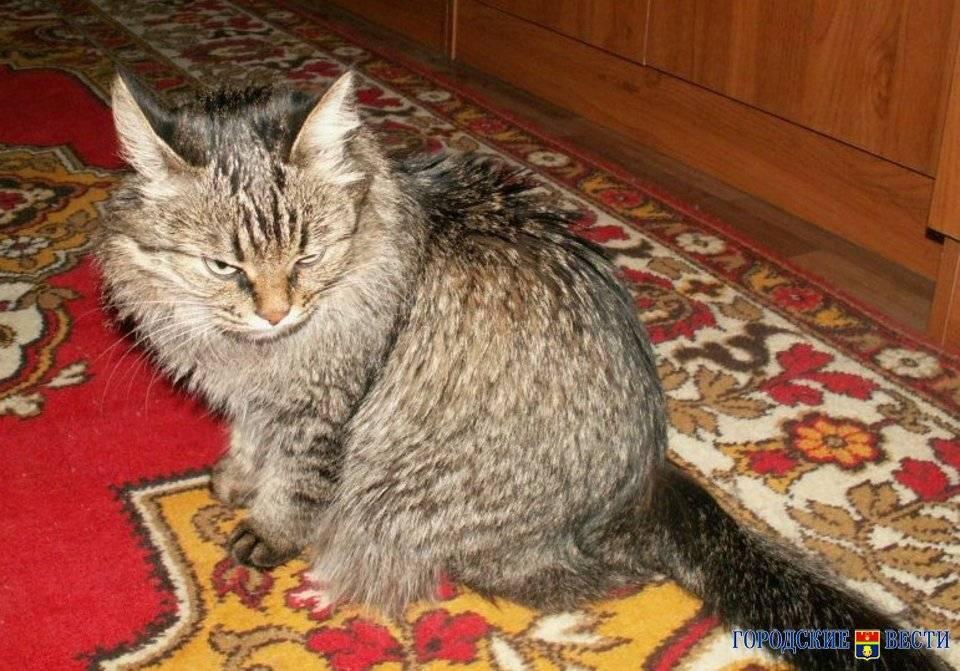 Агрессивный кот: основные причины и решение проблемы
