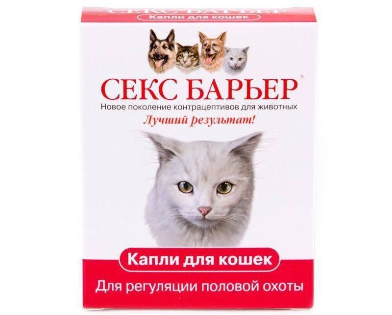 Укол кошке от гуляния