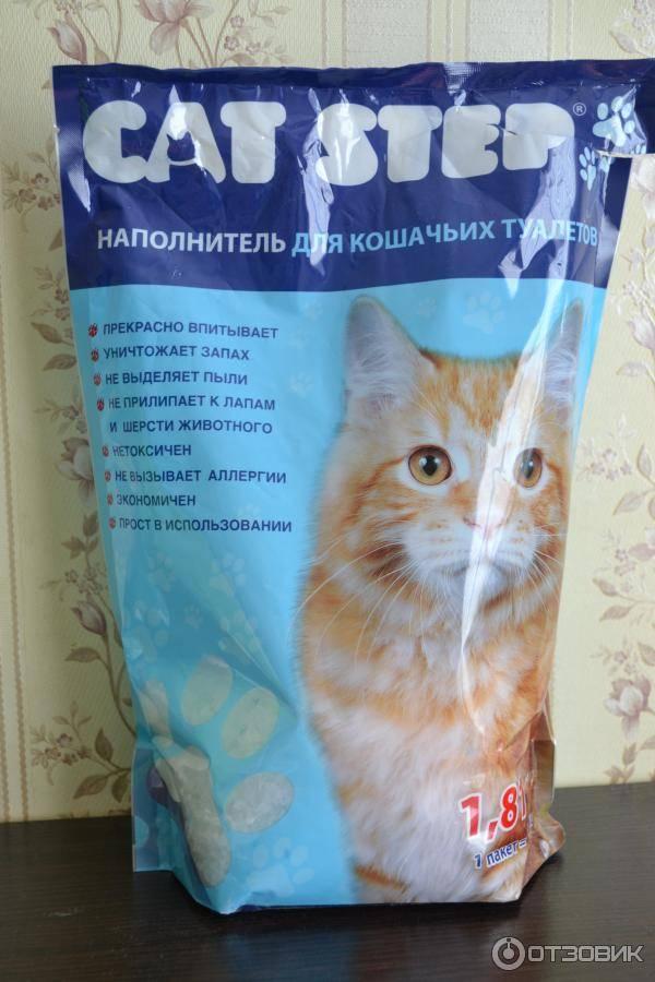 Какой наполнитель для туалета лучше для британских котят