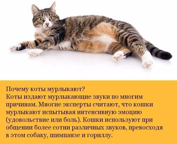 Интересные и смешные факты о кошках