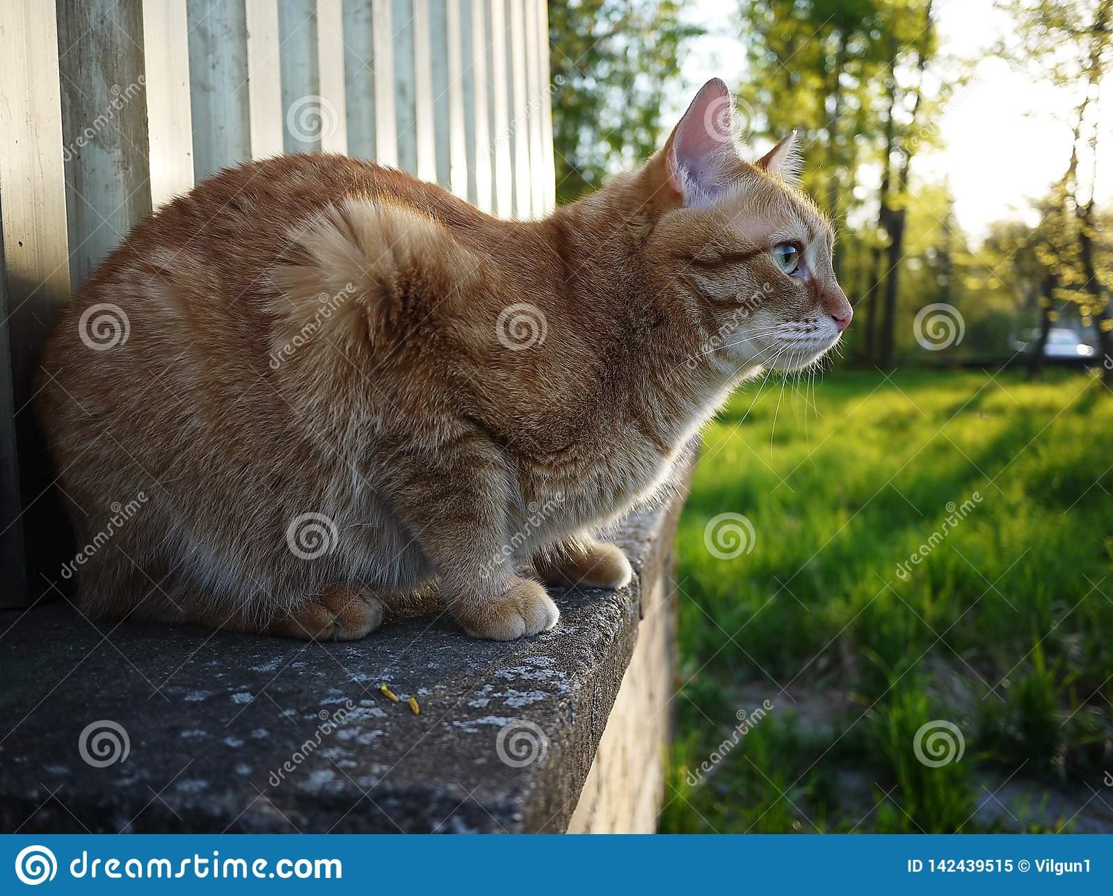 Прогулка кошки