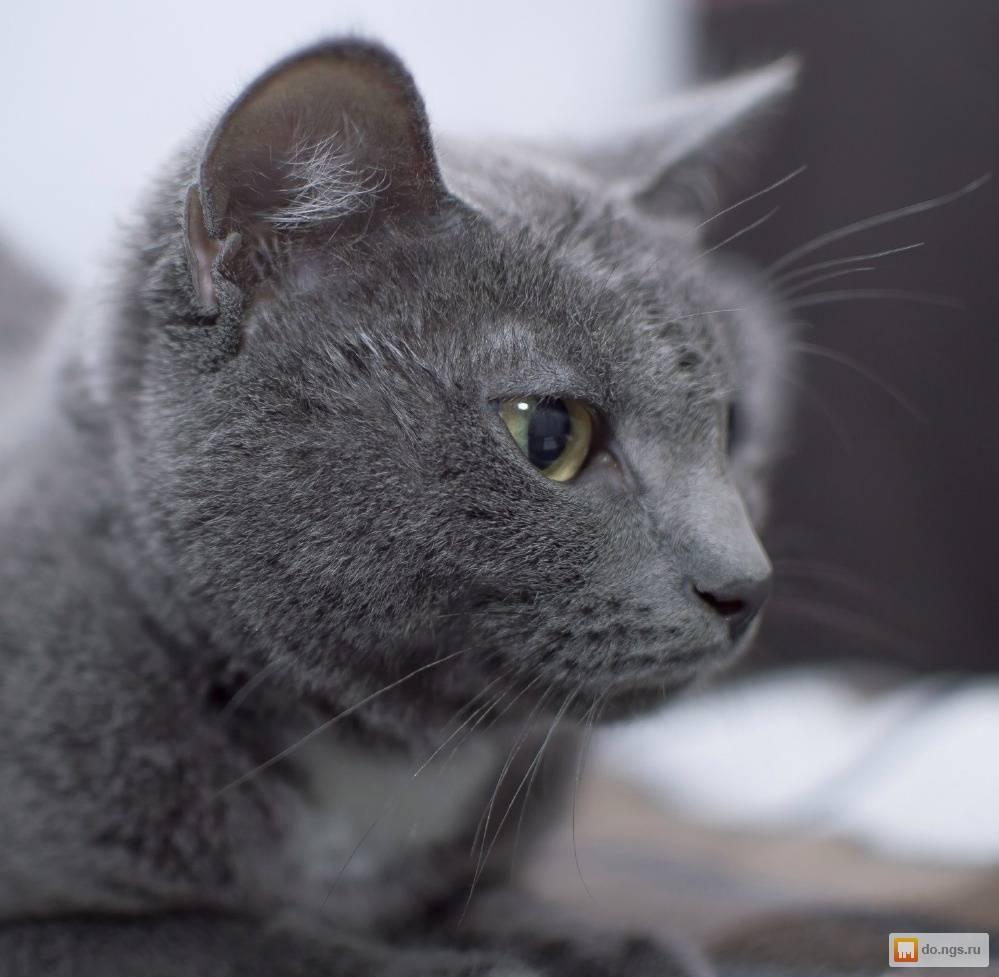 Серая кошка в доме: приметы и поверья
