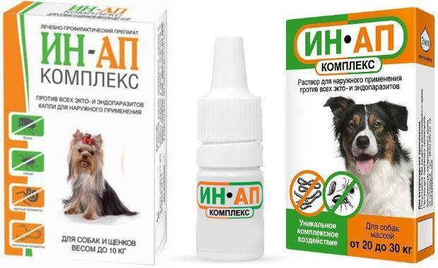 Ин-ап комплекс для кошек и собак: инструкция, отзывы ин-ап комплекс для кошек и собак: инструкция, отзывы