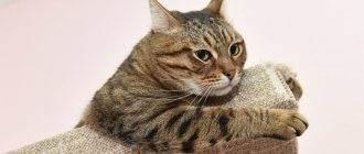 Почему котенок дрожит