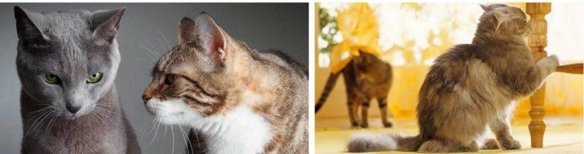 Как отвадить кота метить территорию в доме: рабочие методы