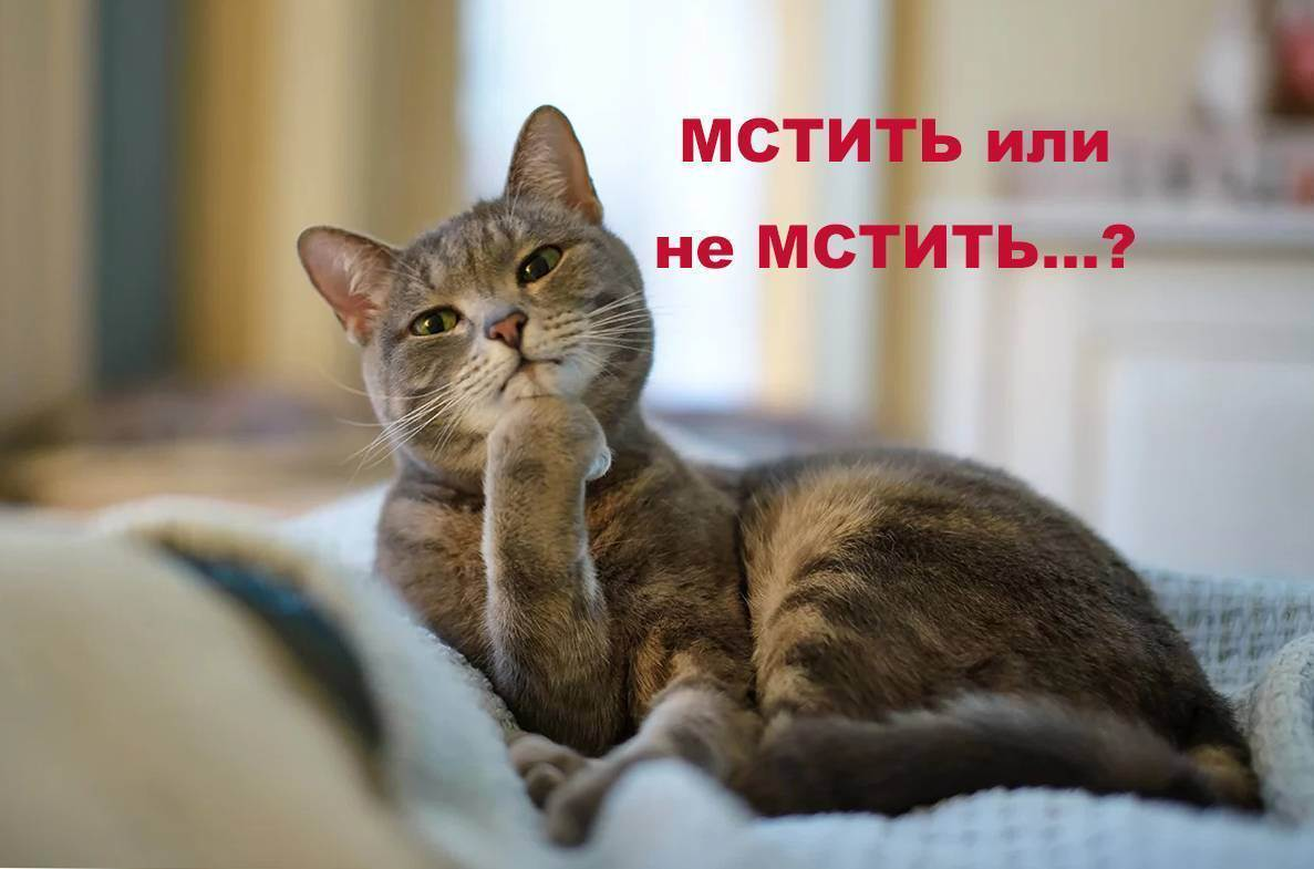 Как отучить кошку ссать на диван??? - как отучить кота ссать - запись пользователя лиля (belasik) в сообществе домашние животные в категории помогите советом - babyblog.ru