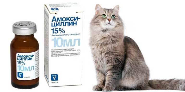 Антибиотики для кошек — советы по применению