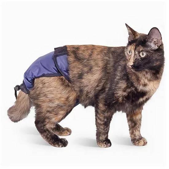 Подгузники для кошек – как правильно выбрать и использовать средство гигиены?