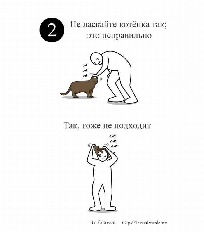 Как гладить кошку или кота?