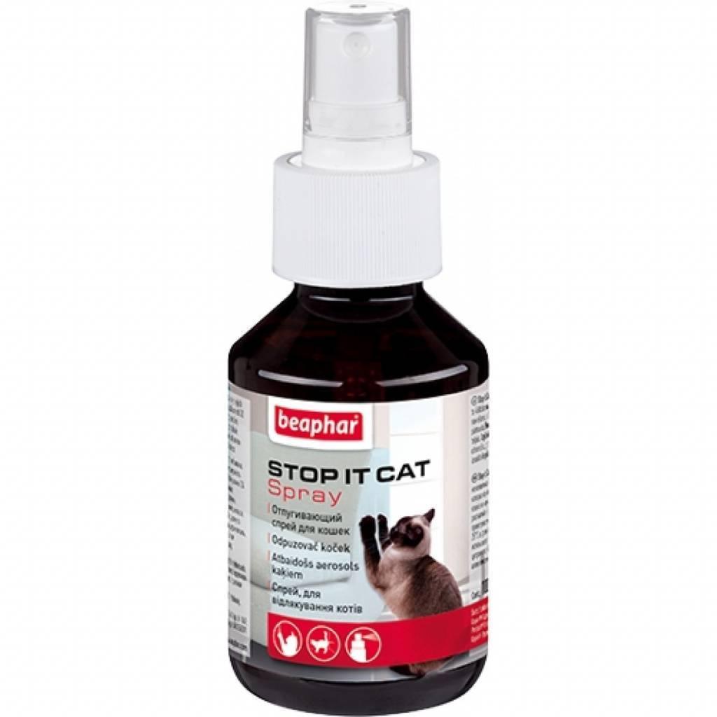 Отпугиватели кошек: как работает устройство и особенности его применения (135 фото)
