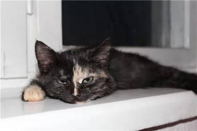 Рвота у кошек: причины и лечение, виды, первая помощь